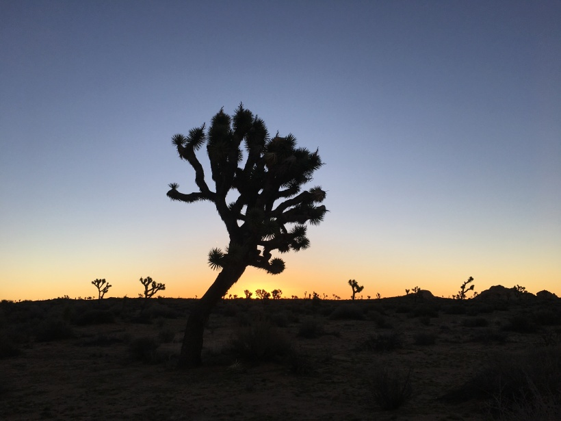 watching the sunrise joshua tree national park