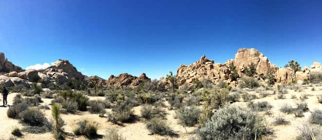 hidden valley joshua tree national park top places to visit
