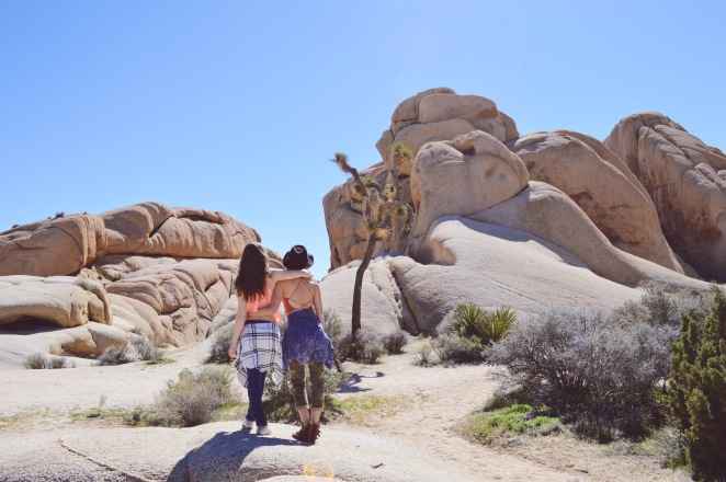 rock climbing joshua tree national park