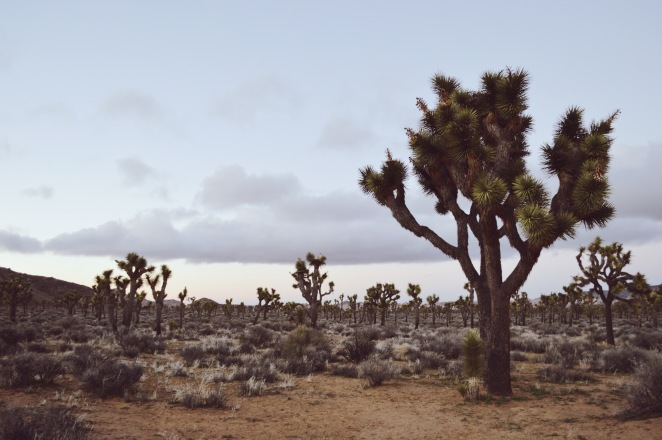 top things to see in joshua tree national park