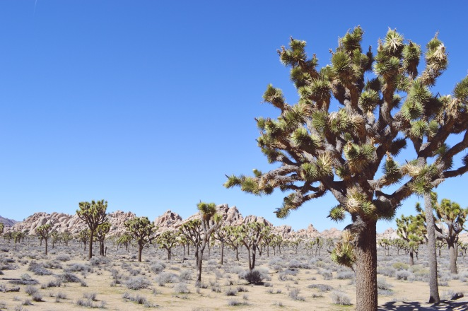 Top Sites in Joshua Tree National Park